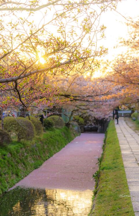 lr blog Tetsugakunomichi-03360