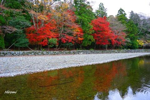 2014-11-30 blog Isuzugawa 1-DSC09968