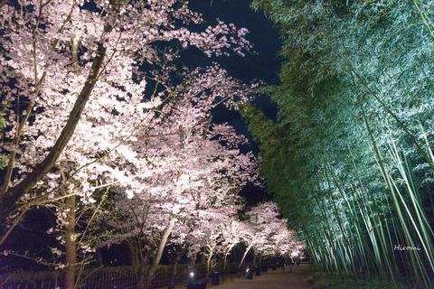 lr blog Heiankyo-01666