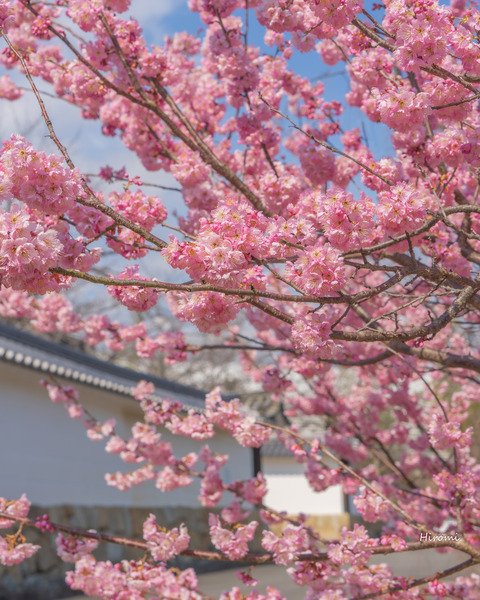 lr blog Kajuji-00143