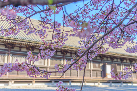 lr blog Sanjusangendo-00923