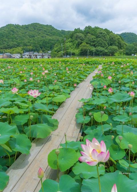 lr blog Yamasakamaboko -07865