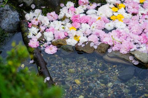 lr blog Kyotogyoen-04583