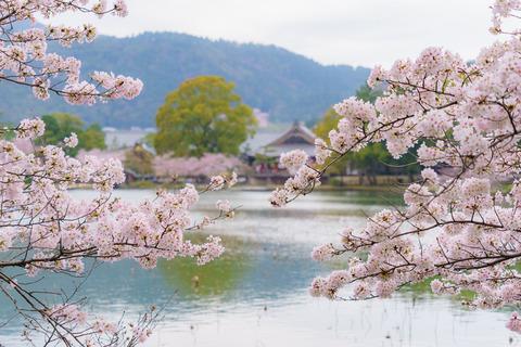 lr blog Daikakuji-01489