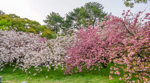 lr blog Kyotogyoen-04605
