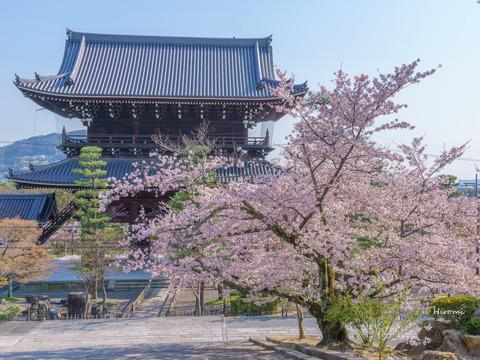 lr blog Konkaikomyoji-05408