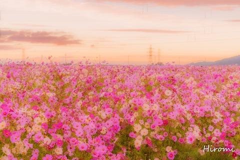 lr blog Nodacho-01078-4