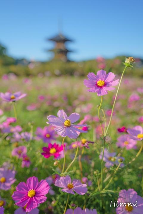 lr blog Hokkiji-01729-2