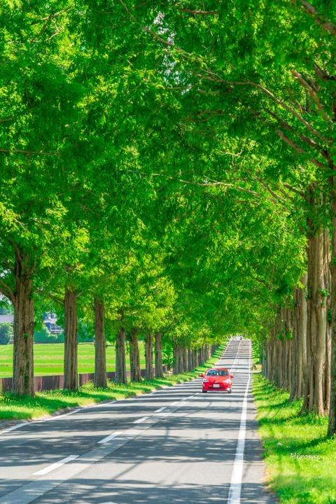 lr blog Makino-00170
