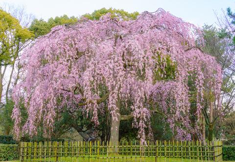 lr blog Kyotogyoen-