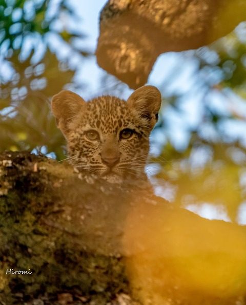 lr blog Londolozi Leopard-01167-2