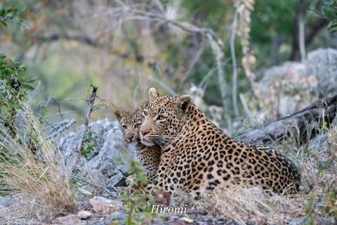 lr blog Londolozi Leopard-00951