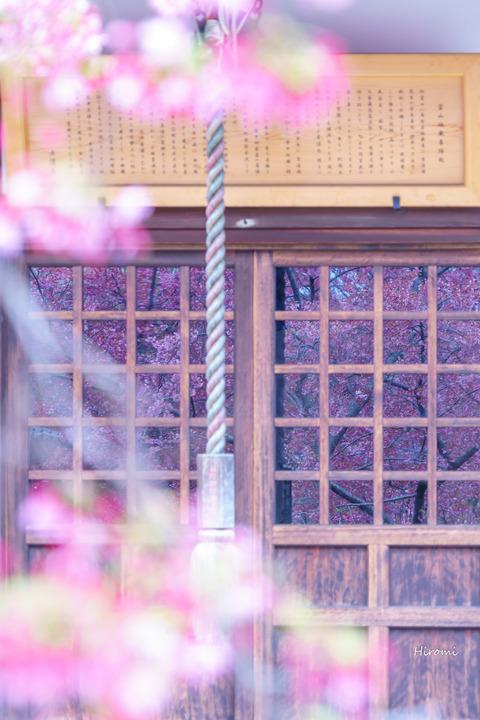 lr blog Chotokuji-04652