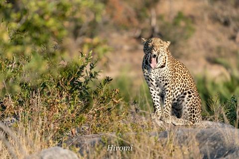 lr blog Krugar Leopard-01857