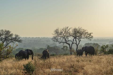 lr blog Londorozi Elephant-04122