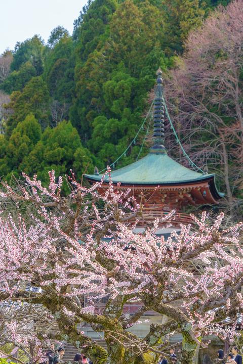 lr blog Horinji Ume-03664