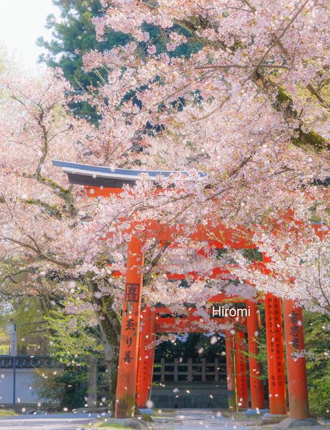 lr blog Takenakainari-05313