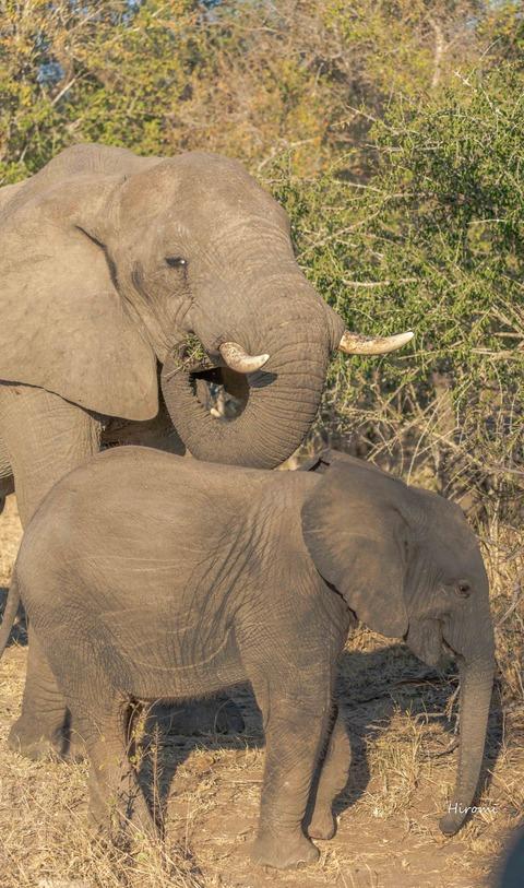 lr blog elephant-00542