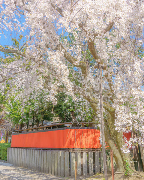 lr blog Kurumazakijinja-01568