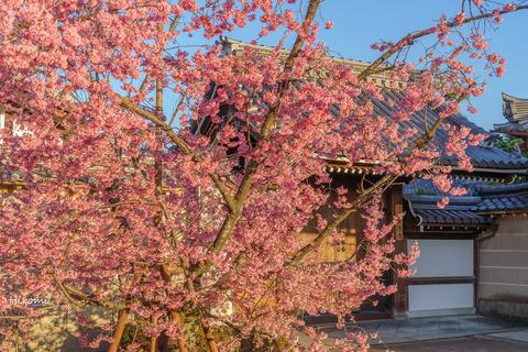 lr blog Chotokuji-01008