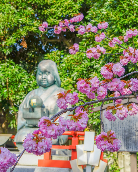 lr blog Senbonshakado-04541