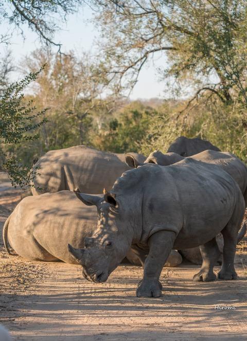 lr blog Londolozi Rhinos-00728