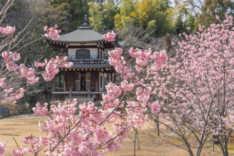 lr blog Kajuji-00180