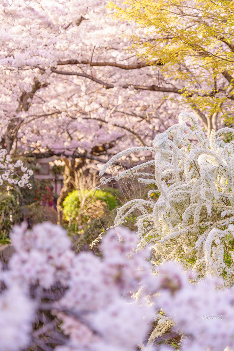lr blog tetsugakunomichi-06299