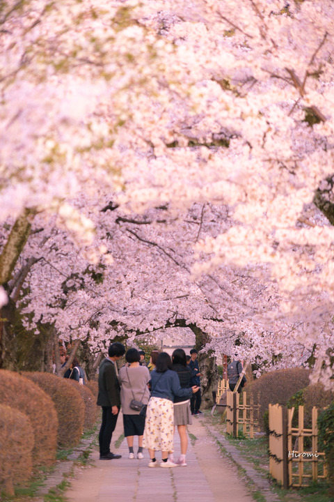 lr blog Tetsugakunomichi-06394
