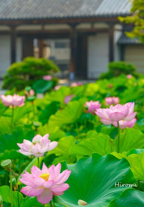 lr blog Toji-03095