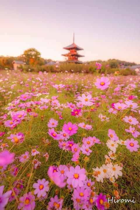 lr blog Hokkiji-01839