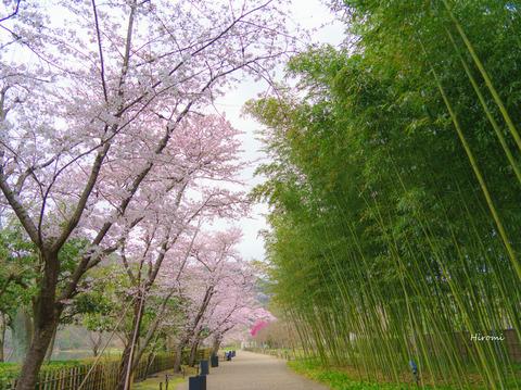 lr blog Heiankyo-01559
