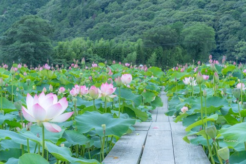 lr blog Yamasakamaboko 7823 ps-