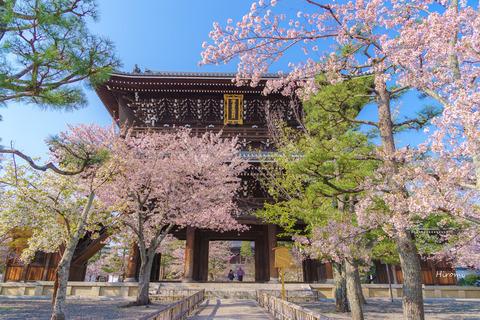 lr blog Konkaikomyoji-05448
