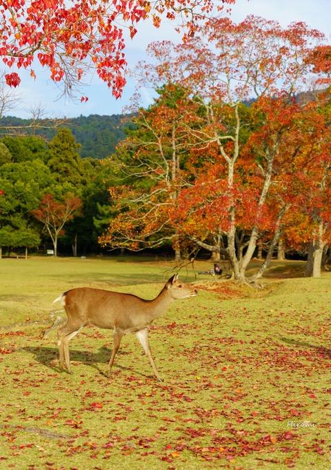 lr blog Narakoen-02271