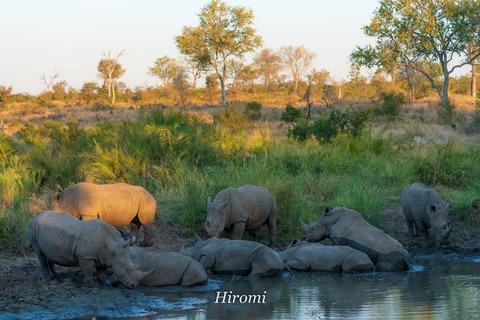 lr blog Londolozi Rhinos-00791