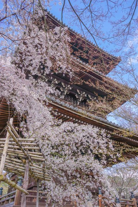 lr blog Shinnyodo-02451
