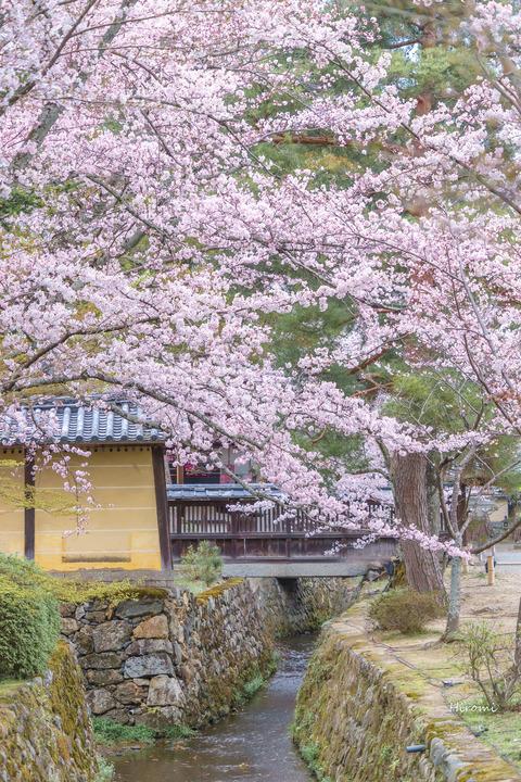 lr blog Daikakuji-