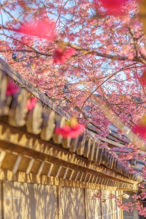 lr blog Chotokuji-01021-2