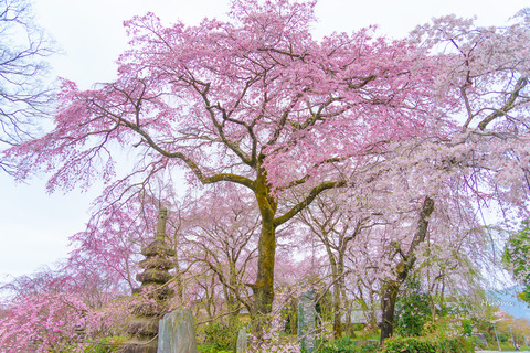 lr blog Sanotouemon-01590