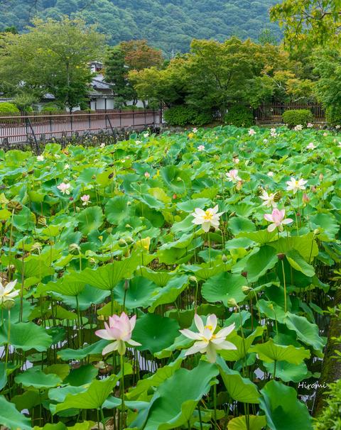 lr blog Tenryuji-00363