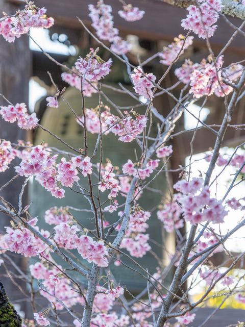 lr blog Chionji-00956