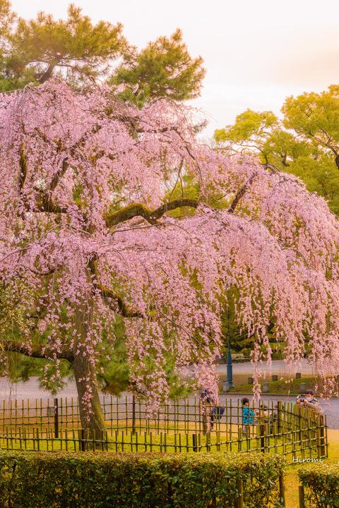 lr blog Kyotogyoen-01433