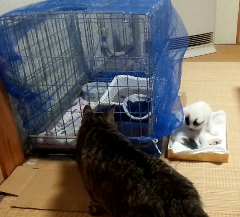 ついでにこれだもの連れて帰りたくなっちゃうけどうちには4歳の大きな赤ちゃん猫いるし日中お留守番が多いから3か月の子猫はまだかわいそうだしぴーがしっぽ太くして