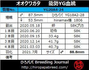 YG20A4-24ラベル