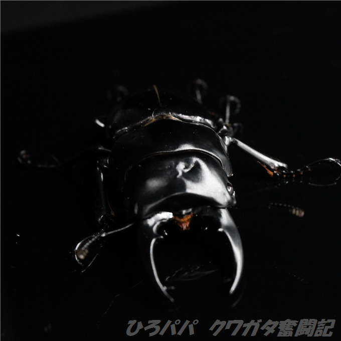 IMG_5477 (2)