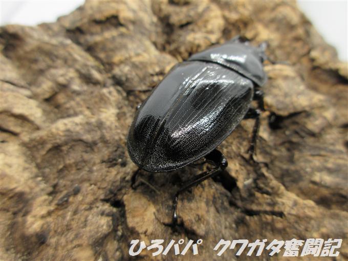 YG17B-01 (1)