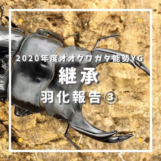 継承 (1)