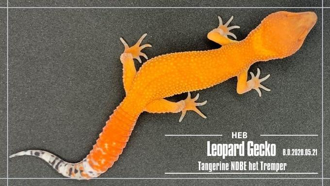 Tangerine NDBE het Tremper (1)
