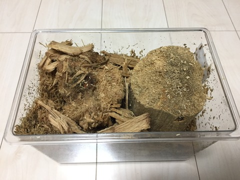能勢YG  Bライン常温飼育産卵木